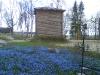 Siniliiliad kevadel